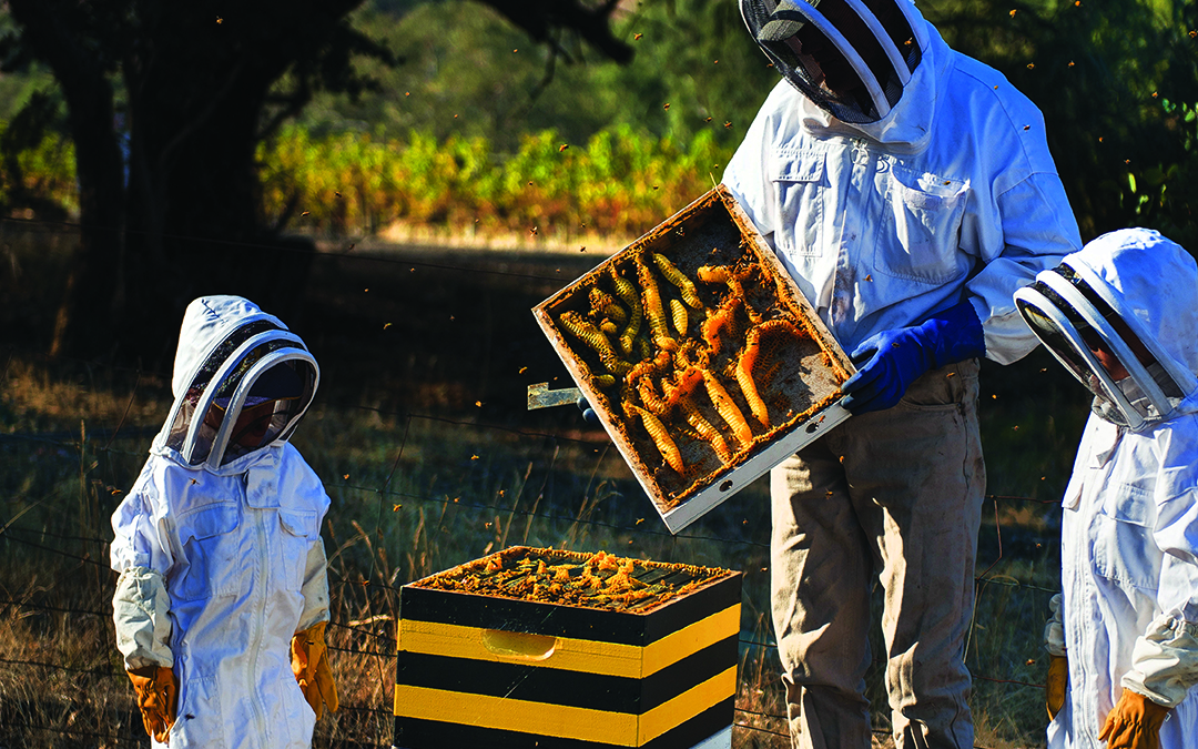 2020 Produce of the Year – Honey