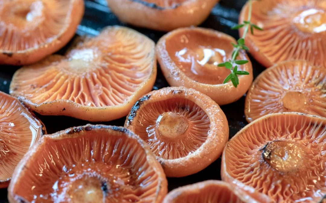 Wild Mushrooming – Sustainable Foraging with  Alison Pouliot